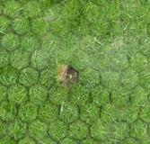 siergrind en grasdallen